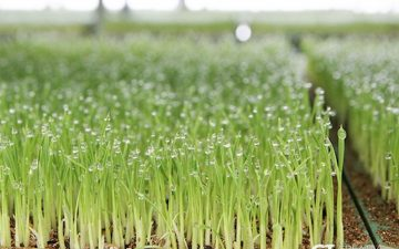 한국인의 밥심! CJ프레시웨이와 지역 농가 '벼 계약재배'로 지켜나가요!