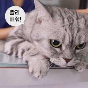 CJ ENM 다이아 티비, '유튜브 구독자 50만명 이상 보유' 창작자 100개 팀 돌파