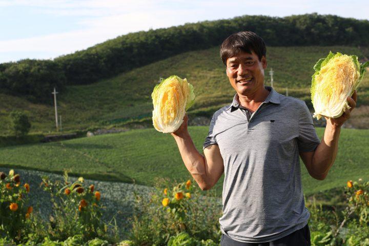 강릉 안반데기에서 CJ프레시웨이와 황금배추를 계약재배하는 농민이 활짝 웃고 있다