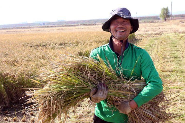 CJ프레시웨이 계약재배 참여한 전북 익산시 황등면 한 농민이 수확한 벼를 들고 활짝 웃고 있다.