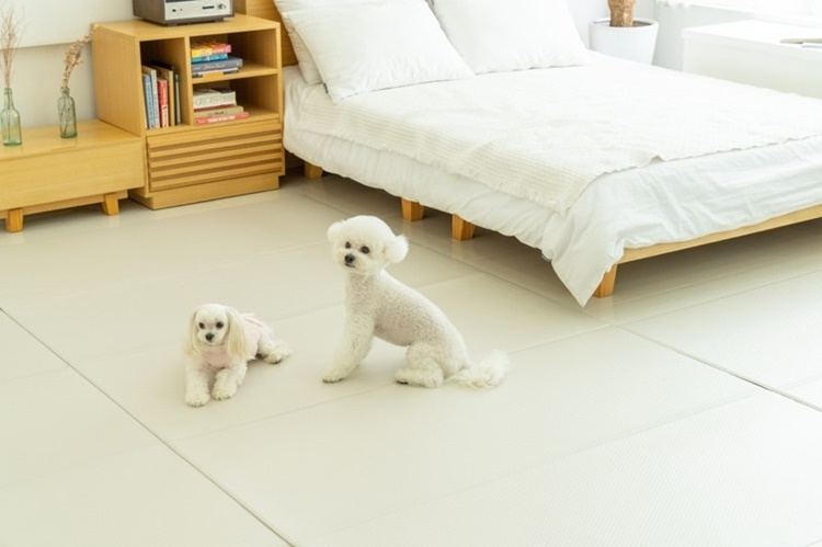 방 안의 모습. 오른 쪽에는 하얀 침대가 놓여있고, 그 옆에 책꽂이와 선반이 놓여있다. 침대 앞에는 흰 강아지 두 마리가 앉아 있고, 바닥에는 아이보리색 매트가 깔려있다.