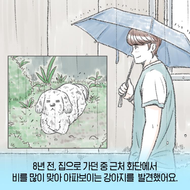 8년 전, 집으로 가더 중 근처 화단에서 비를 많이 맞아 아파보이는 강아지를 발견했다는 김상우 택배기사님의 이야기가 카드뉴스로 구성되어 있다.