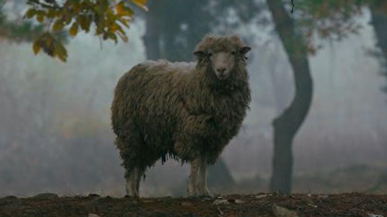 영화 '정말 먼 곳' 스틸로, 숲 속에 서 있는 양 한 마리가 카메라를 향해 물끄러미 쳐다보고 있다.