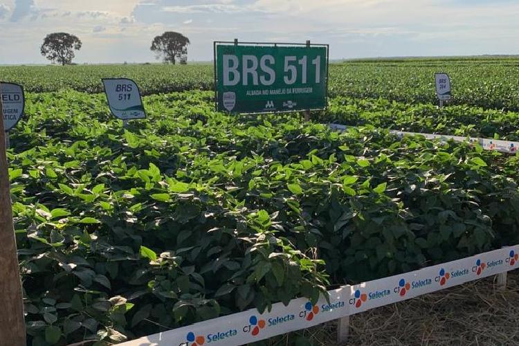 CJ제일제당의 브라질 농축대두단백 생산기업 CJ셀렉타의 Deforestation-free 대두 농장 사진 전경으로, 녹색 물결이 찬란한 대두들이 줄 이어 자라나고 있고, 'BRS 511'이란 표지판이 보인다.